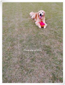 いつものボール遊びのはじまり~