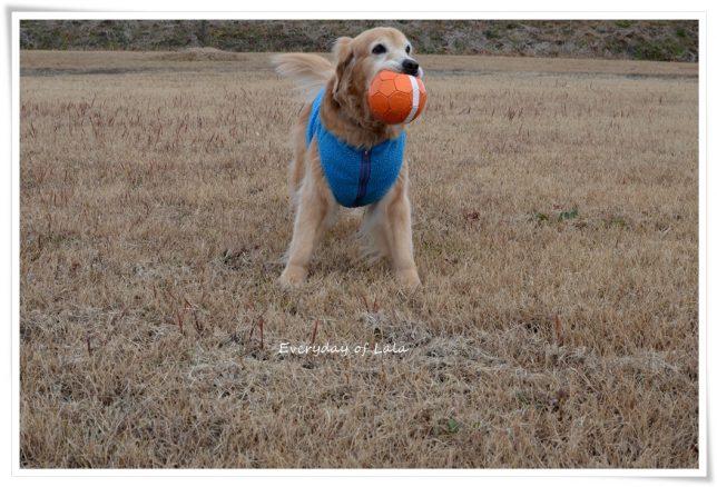 ボールをくわえて遊ぶララ