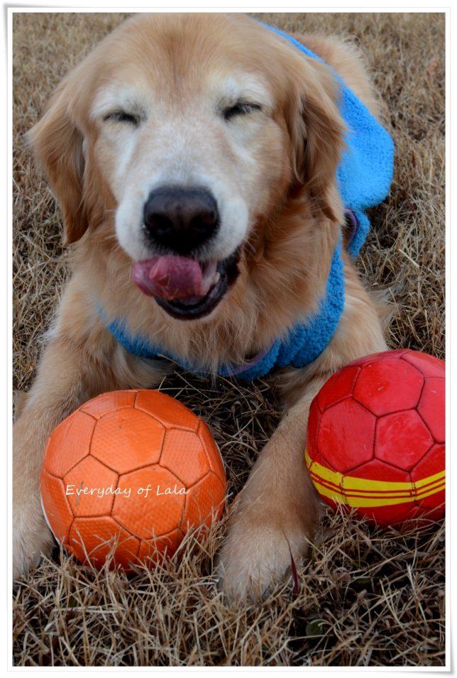 ボールで遊べて喜んでるララのペロン