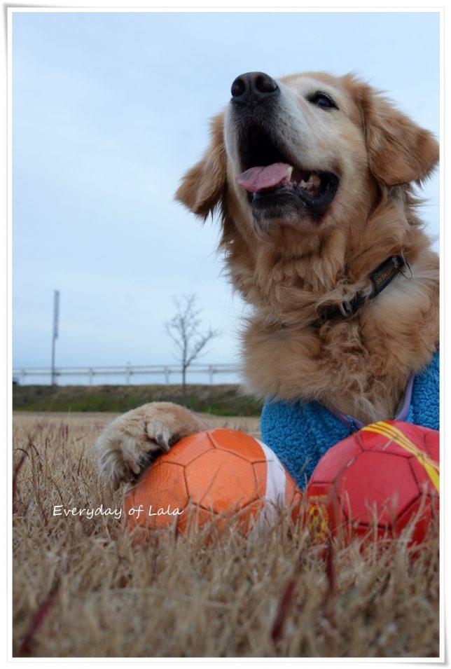 ボールで遊べて喜んでるララ