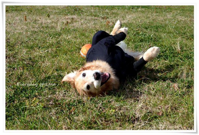 忍者犬ララからゴロスリ2