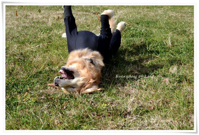 忍者犬ララからゴロスリ3