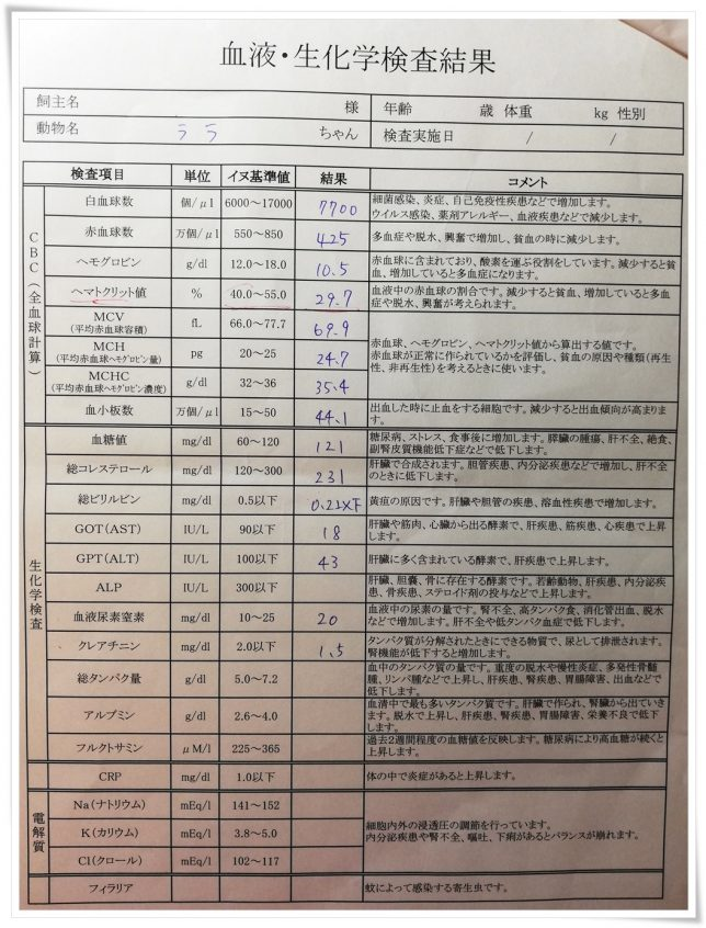 ララ血液検査結果1月8日