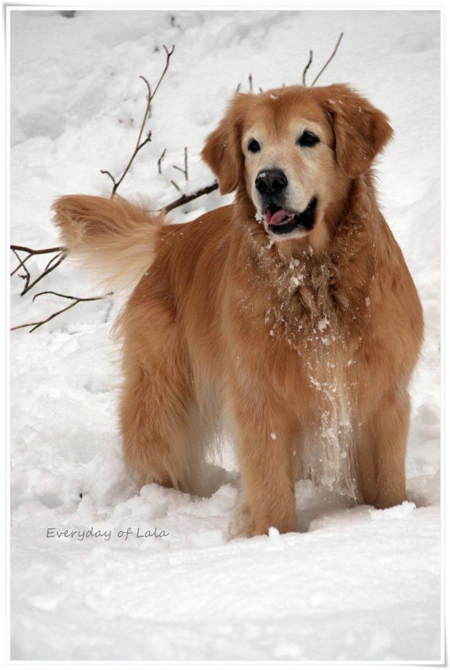 雪遊びに来て喜ぶララ