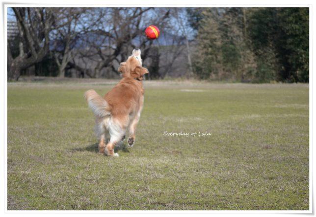 ボールをキャッチしようとするララ1