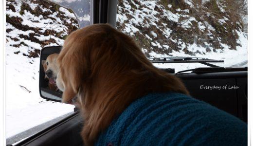 今シーズン初の雪遊びへやっと行くことができましたが、積雪量が少なくゴロスリの楽しさも半減かな?
