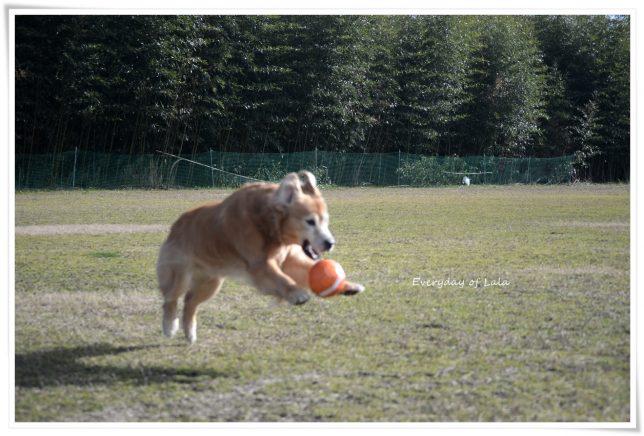 ボールをキャッチするよララ