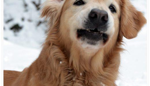揖斐高原は積雪してなかったけど、雪遊びへ行けて嬉しそうなララでした!