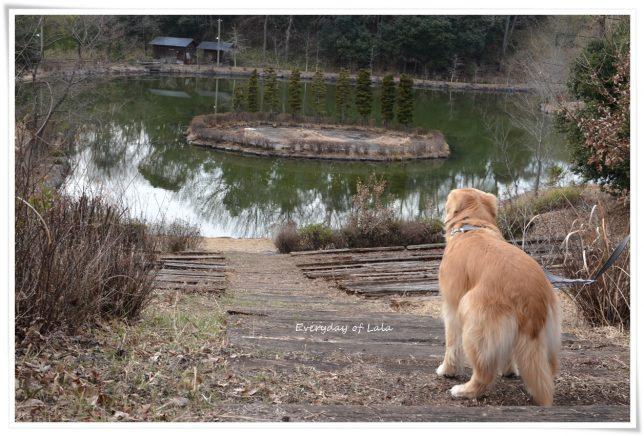 池を見るララ