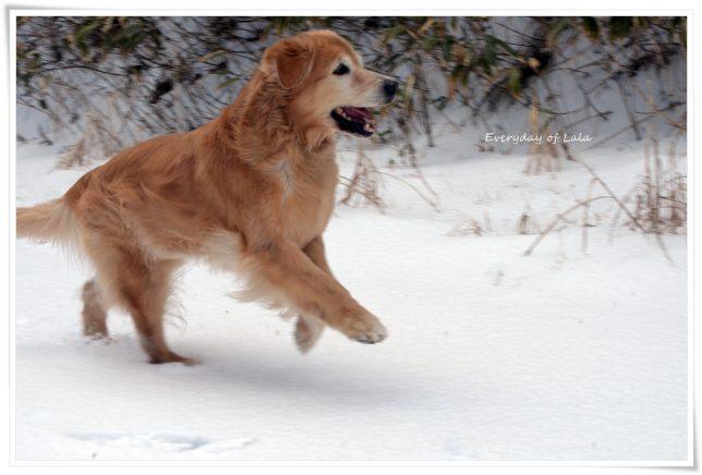 雪遊びで楽しく走る!