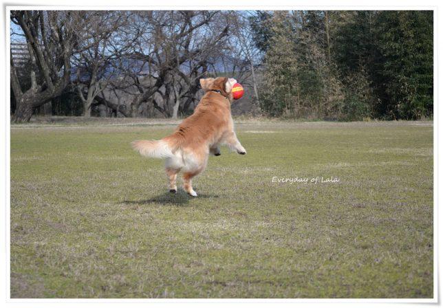 ボールをキャッチしようとするララ2