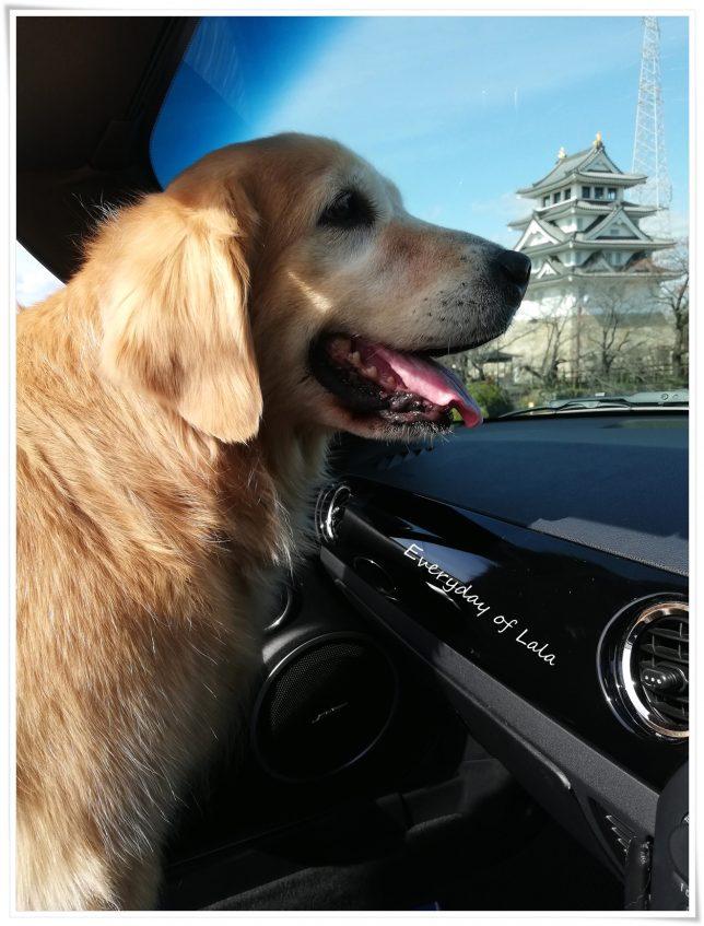 ロドの車内にいるララを撮る