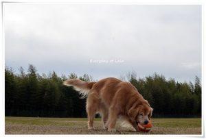 ボールをカミカミするララ