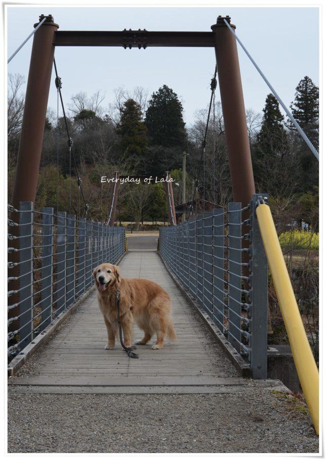 吊り橋を背景に写真を撮る