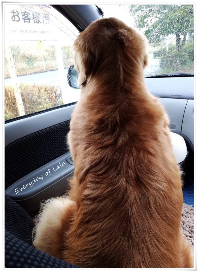 車で待つララは外を見る