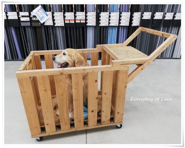 大型犬のカートに乗るララ横顔
