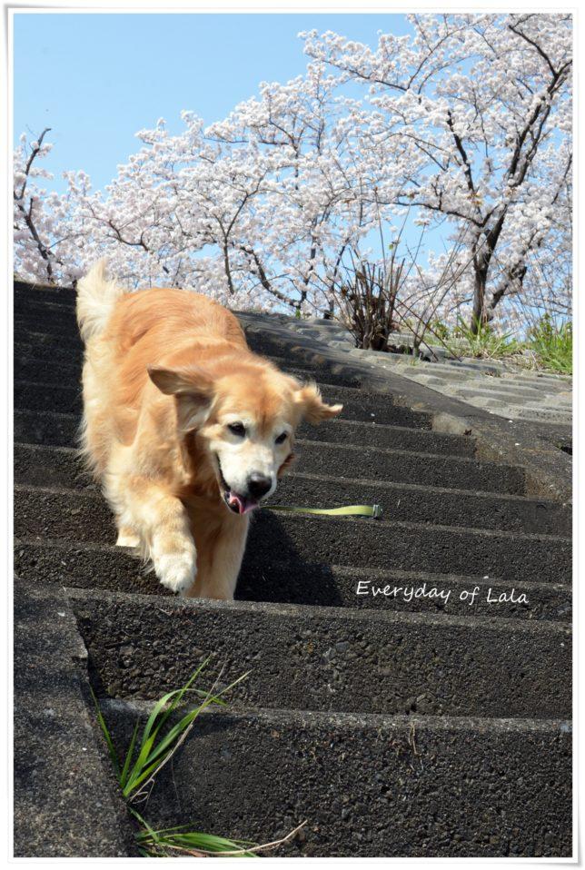 階段を駆け下りる