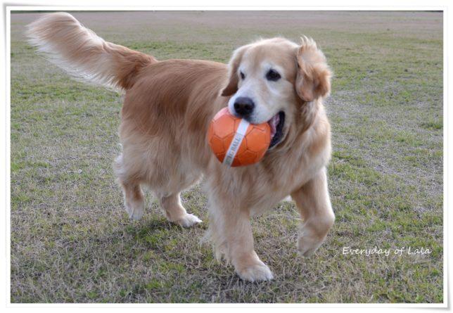 ボールをくわえて次の動きを狙う