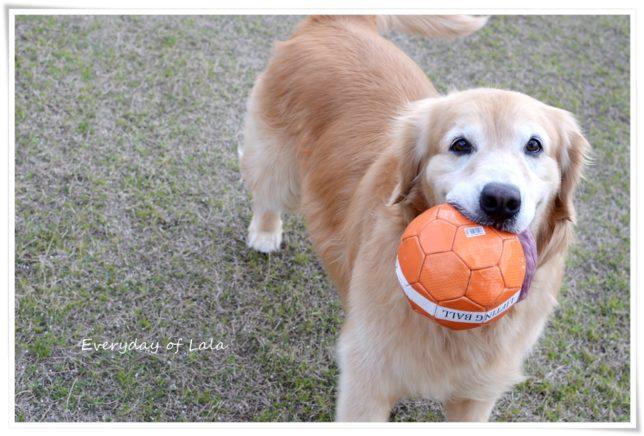 上手にボールをくわえています