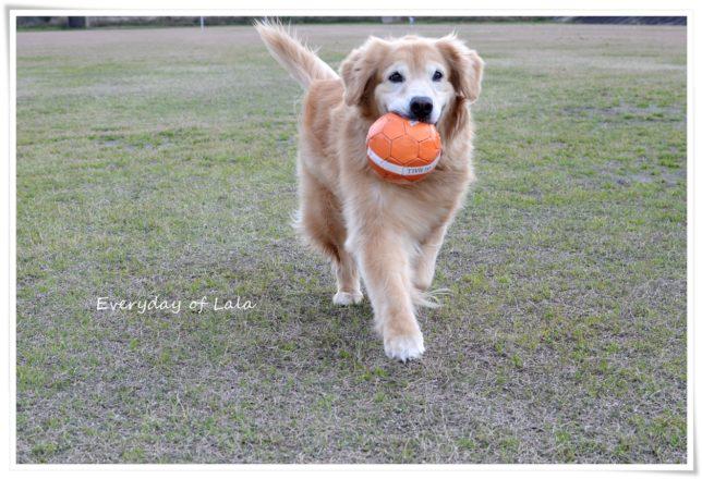 ボールをくわえて満足そうな顔をするララ