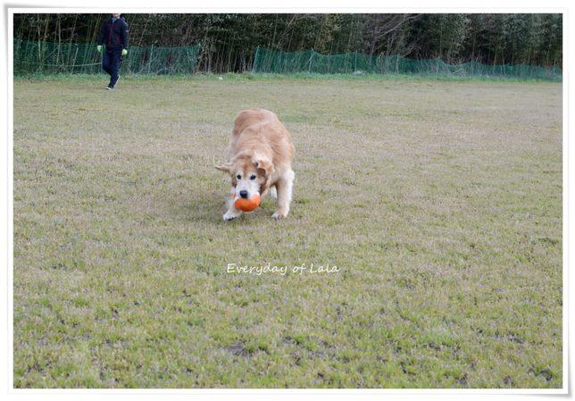 ボールをキャッチしてカメラ目線