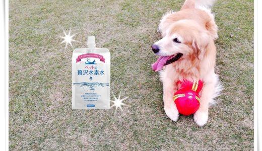 特徴や評判をチェック【ペットの贅沢水素水】大切なペットにどんな水をあげている?