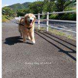 ララと軽く散歩1