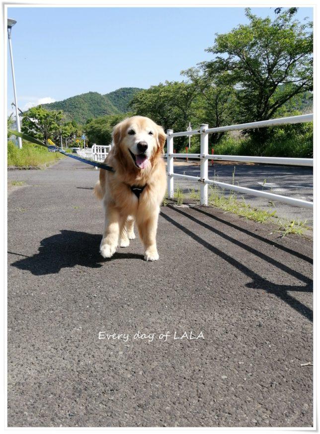 ララと軽くお散歩2