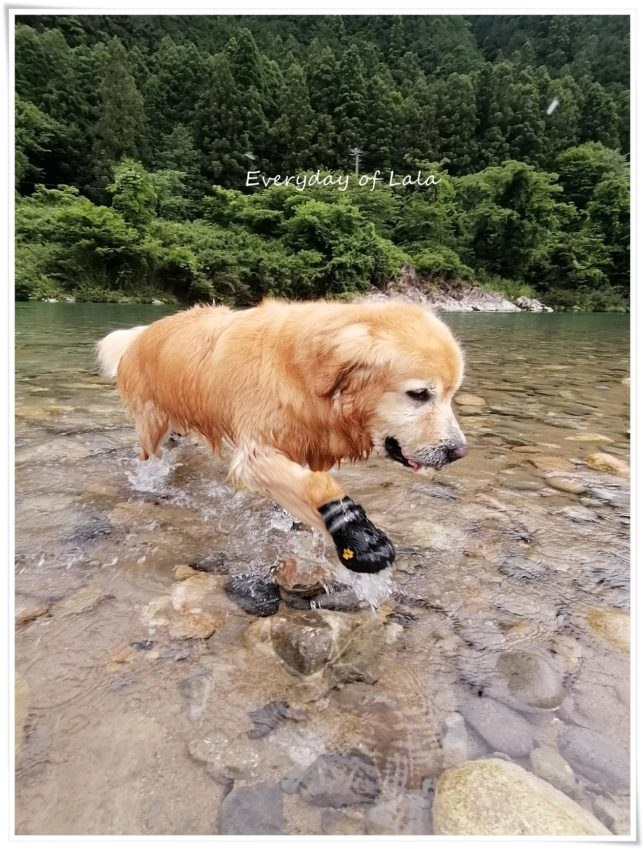 川遊び楽しんでいますよ