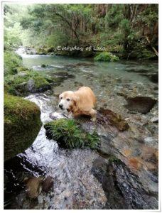 川でひんやり
