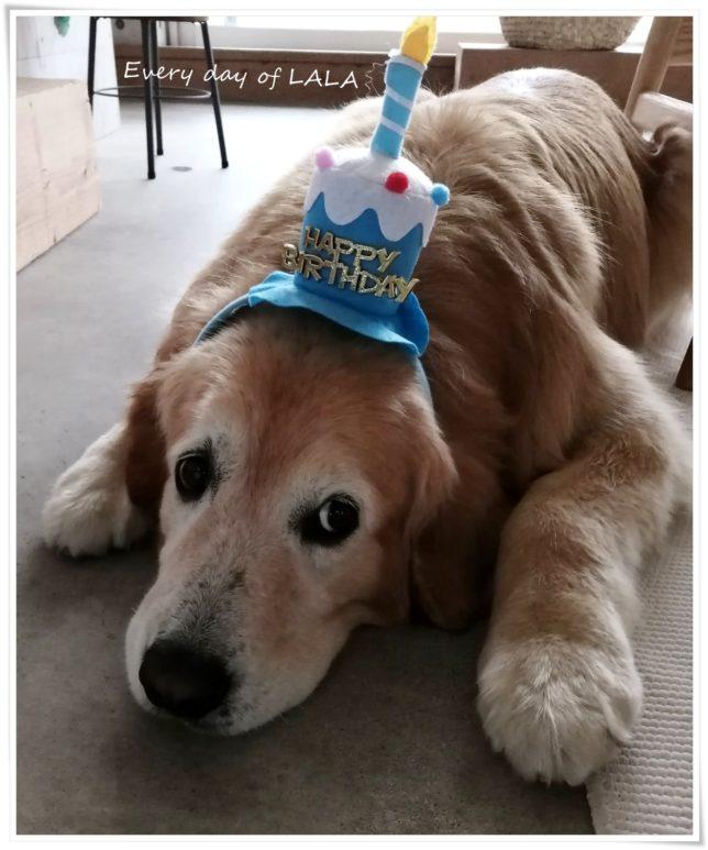 誕生日被り物