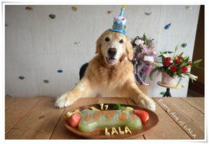 11歳のケーキ