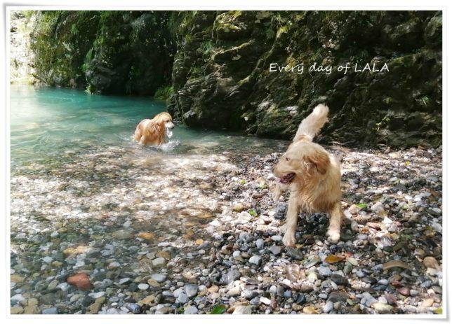 銀ちゃんと川遊びで楽しそう