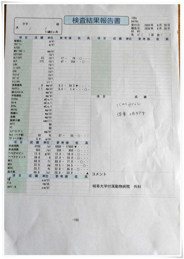 20200820_血液検査