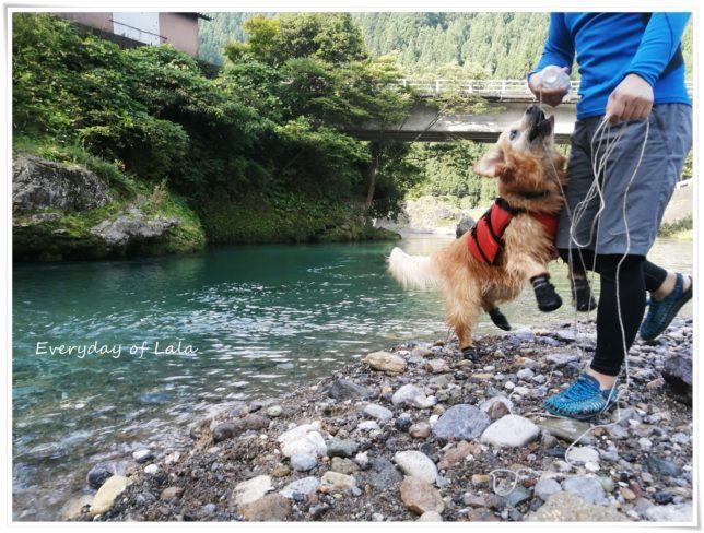 神埼川へやってきました。