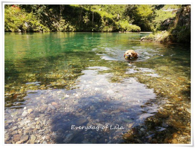 川で気持ちよく泳いでいます