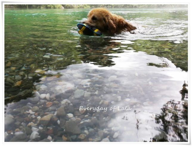 川で泳ぐララ