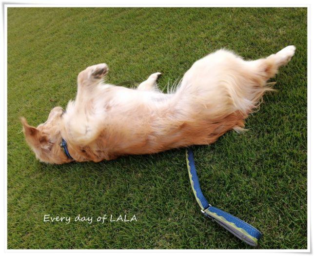 芝生の上でゴロゴロスリ