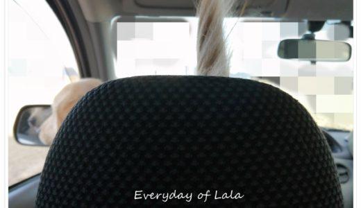 【リバーパークおぶさ】ララが喜びそうな場所でまったり過ごす