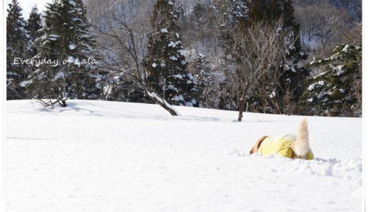 内緒だよ【雪遊び】好きなことをして短時間で気分をリフレッシュする方法