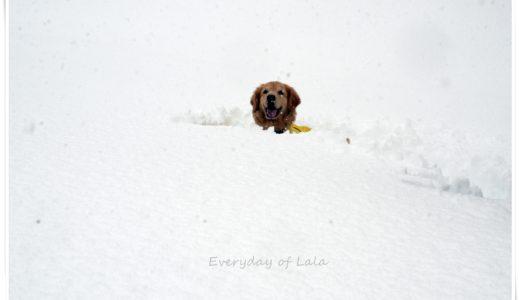 豪雪地帯で雪に埋もれる【雪遊び】今シーズンの積雪は凄い!