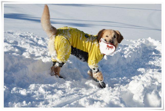 雪玉つけた