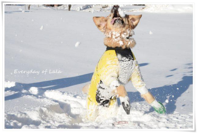 ジャンプして雪をキャッチ