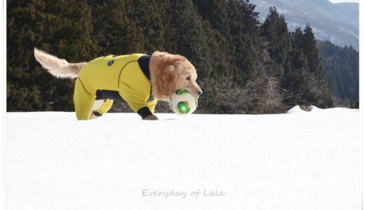 快晴のお天気に恵まれ『雪遊び』ペット用ゴーグルを装着して目を保護します【動画あり】