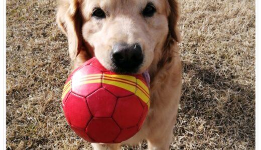 いつものお散歩=ボールで遊ぶこと!