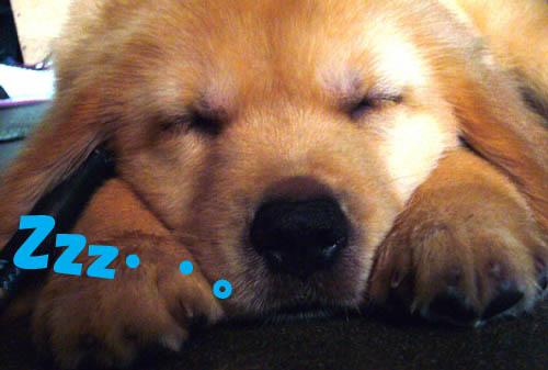 寝顔ズーム